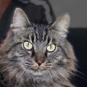 In Memory Winston the Cat